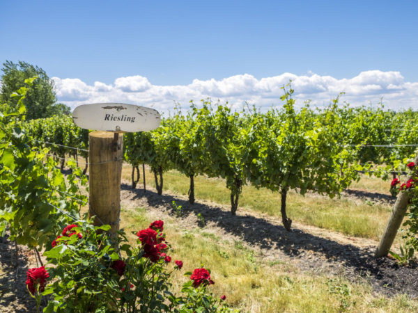 Matador Network - Niagara wine country is the perfect region for winery hopping by bike